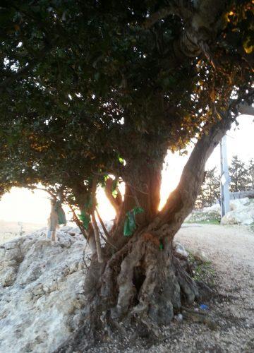 עץ עתיק אחד – עשרה סרטים ירוקים והרבה נשים מאמינות